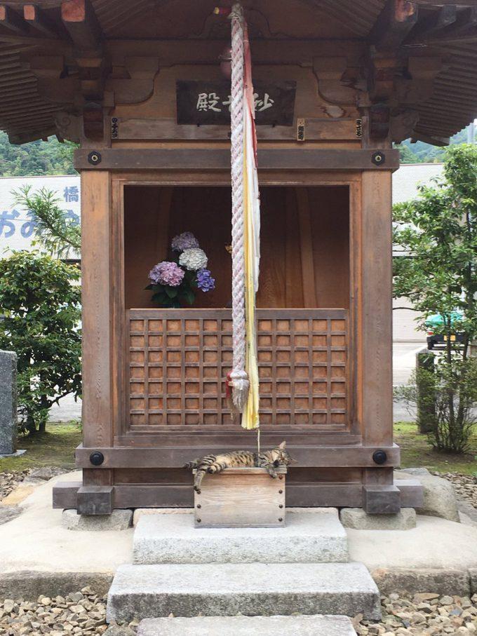 猫神様? 神社に来たのに賽銭箱の上で猫が寝ていてお参りできない(笑)