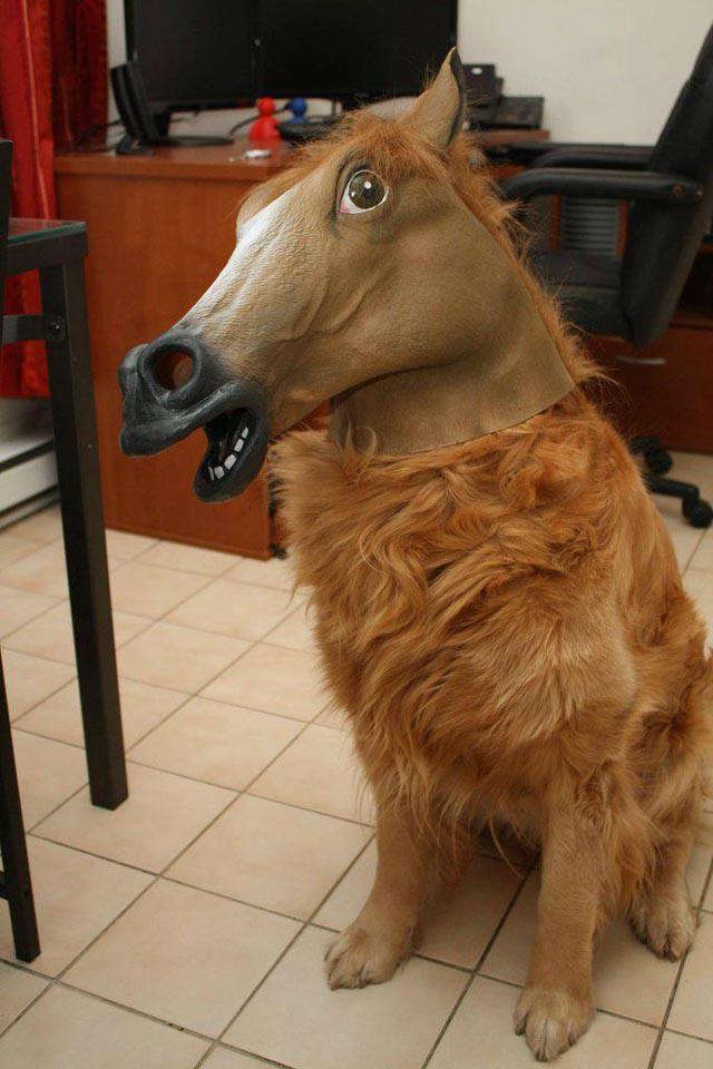 ヒヒーン! ハロウィンなので犬に馬のマスクを被せて仮装させたら(笑)