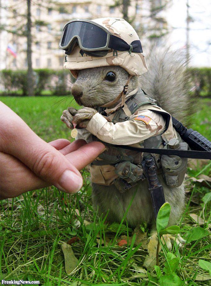 飼いたい! 勲章を両手に持つリスの兵士がかわいすぎます(笑)