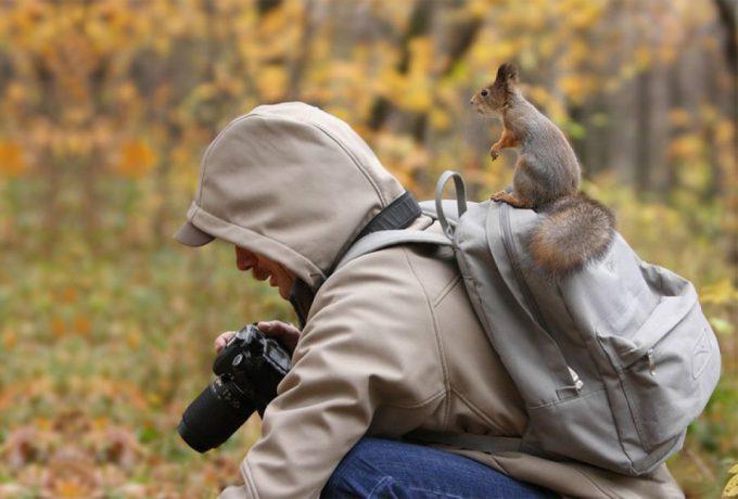 見つからない! リスを撮影したけどなかなか見つけられない動物カメラマン(笑)