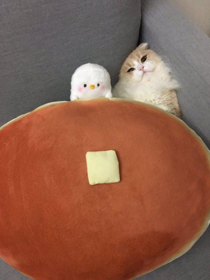 なにか? クッションの下でくつろぐ猫がどんな格好をしているのか気になってクッションをどけたら(笑)