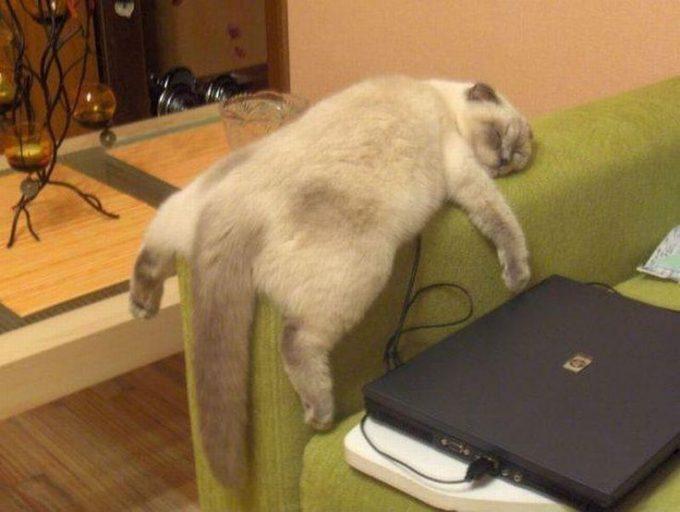 ぐでー! ソファーの肘掛けでだらしなく眠る猫がかわいい(笑)