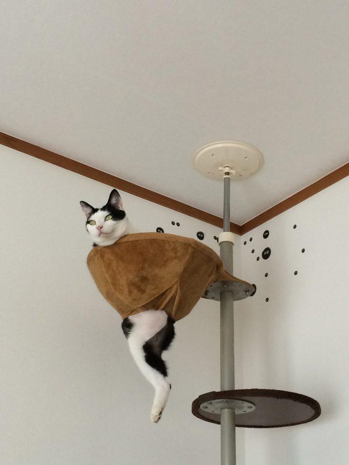 落ち着く? キャットタワーのベッドに穴が開いても使い続ける猫の様子がおもしろい(笑)