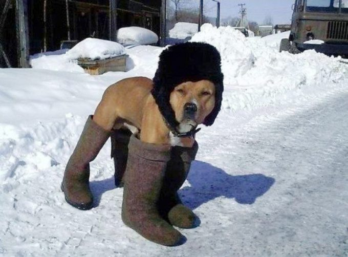 暖かいワン! スノーブーツを履いた犬が暖かそうだけど歩きにくそう(笑)