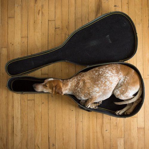ちょうどいい! ギターケースをベッド替わりにする犬(笑)