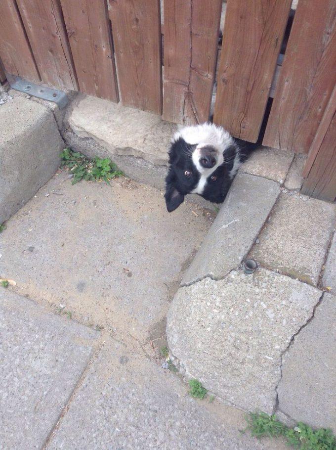 こんちにちは! 塀の下からあり得ない角度で顔を出す犬がかわいい(笑)