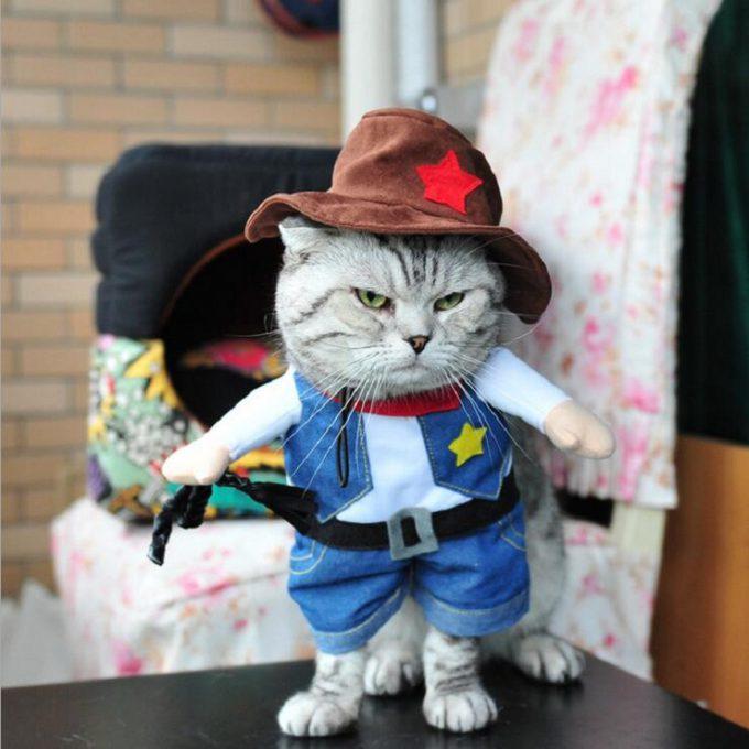 【ハロウィンの猫おもしろ仮装画像】勝負ニャン! ハロウィンに猫ちゃんに最適なカウボーイ仮装(笑)