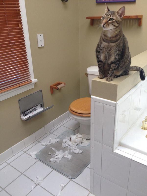 知らんぷり! トイレットペーパーで遊んだのにすっとぼける猫(笑)