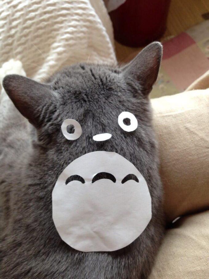 サツキー見てみてー! ネコの背中で作るトトロがかわいい(笑)