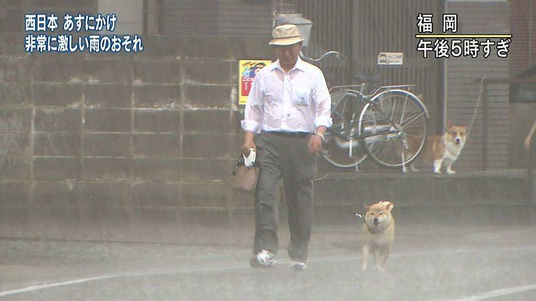【豪雨と犬おもしろ画像】豪雨に散歩する柴犬とそれを見つめるコーギーがおもしろい(笑)