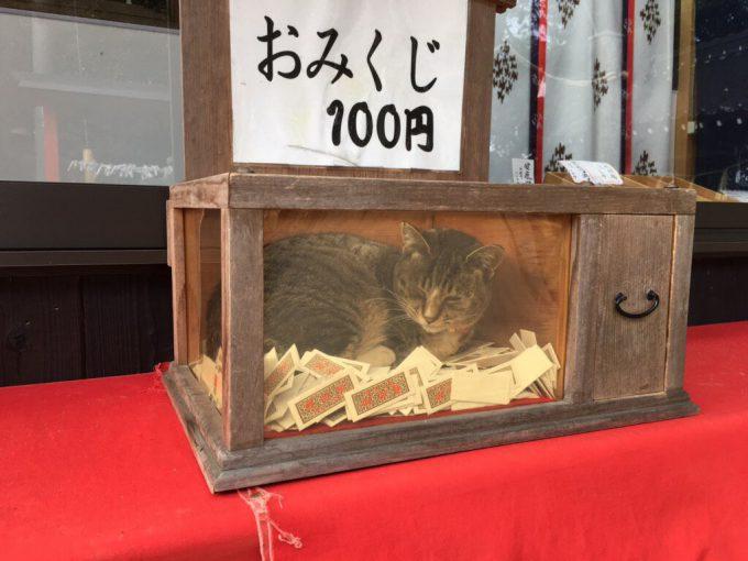 猫おみくじ? おみくじ箱の中で暖を取るネコがかわいすぎ(笑)