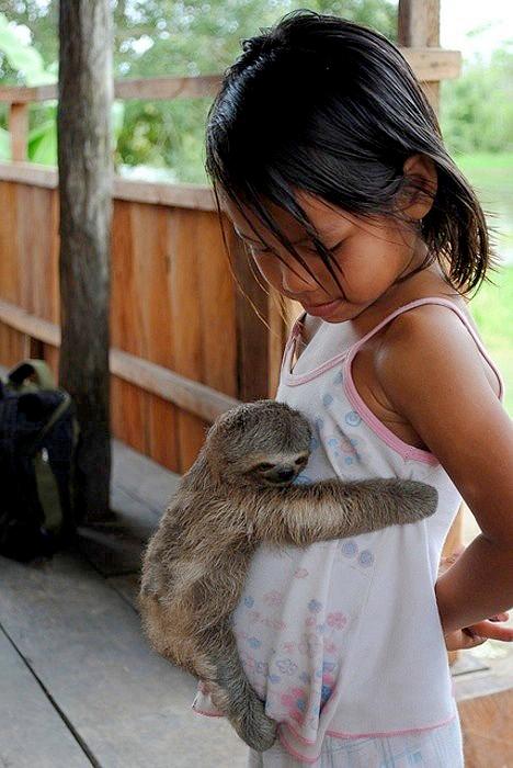 すやすや! 女の子のお腹にしがみついて気持ちよさそうに眠るナマケモノがかわいい(笑)