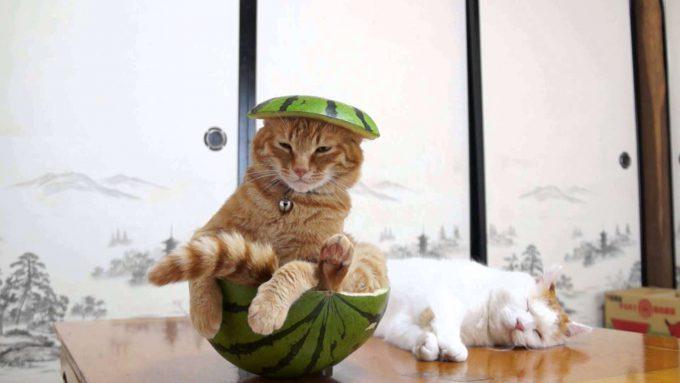 リアルタマ! 『サザエさん』エンディングのタマみたいな猫(笑)