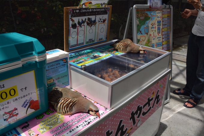 ぐで~! 「ご飯買って」とご飯ケースの上に寝そべる掛川花鳥園の鳥たちがかわいい笑