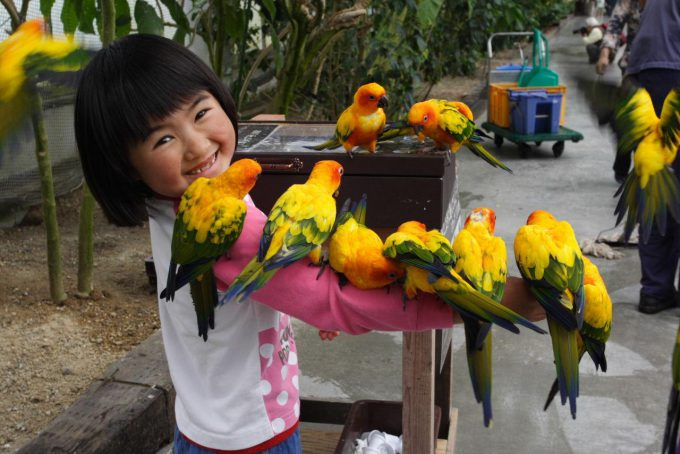 静岡県掛川市の掛川花鳥園