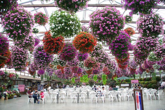 静岡県掛川市の掛川花鳥園の花