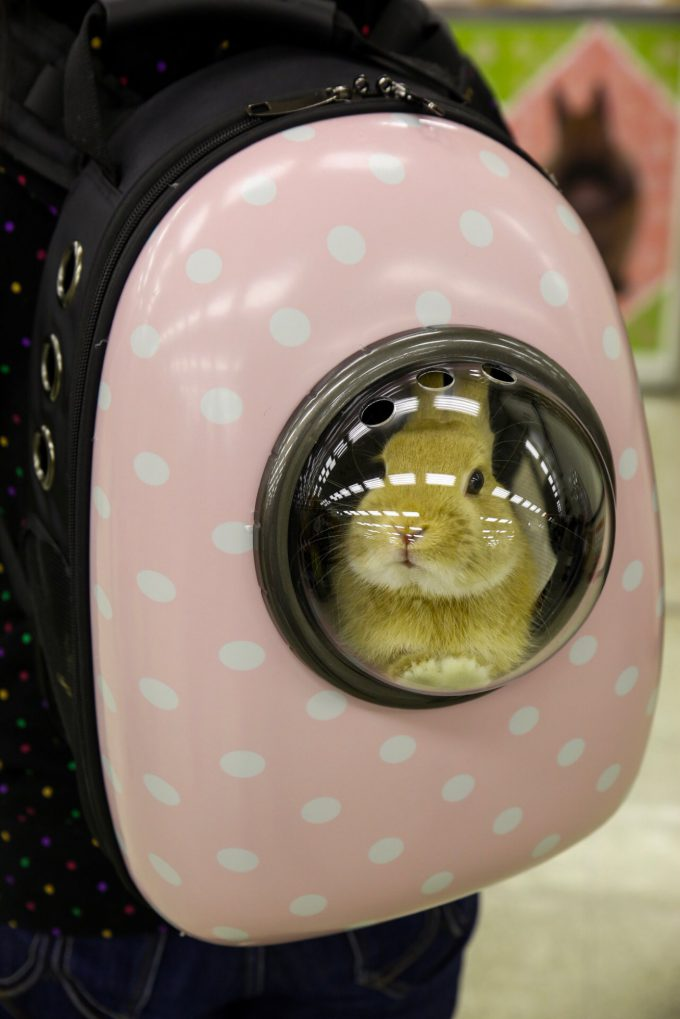 ヤバかわいい! リュックタイプのキャリーに入ってるウサギがかわいすぎ(笑)