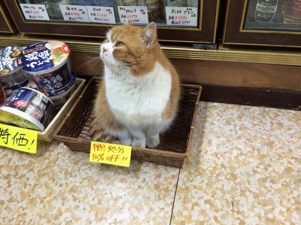 半額処分! お店でカゴ売りされていた50%OFFの猫(笑)