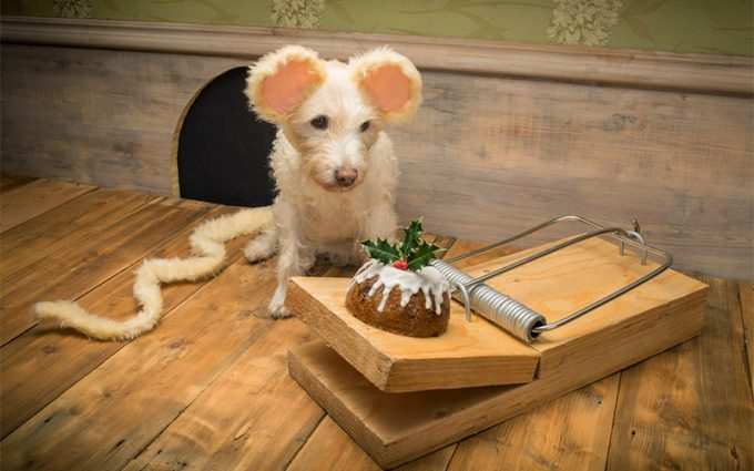これは罠! ねずみ捕りに仕掛けられたクリスマスケーキをじっと見つめる犬(笑)