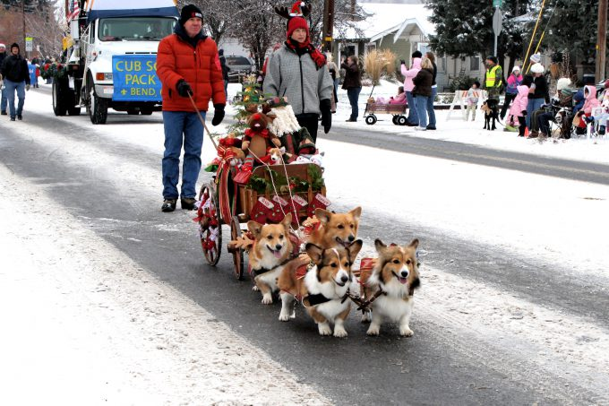 かわいい! クリスマスプレゼントを荷車に乗せて引っ張るコーギーたち(笑)