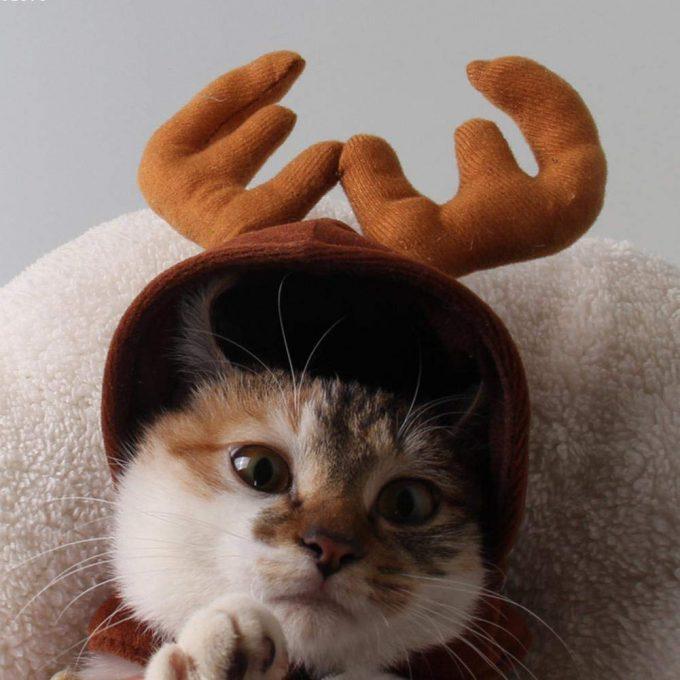 ヤバかわいい! クリスマス用のトナカイ被り物をした猫ちゃんがかわいすぎ(笑)