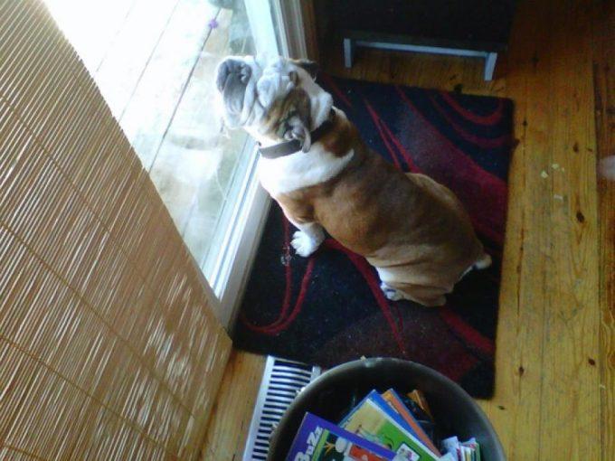 すごい寝相! 窓に顔を立てかけるようにして眠る犬(笑)