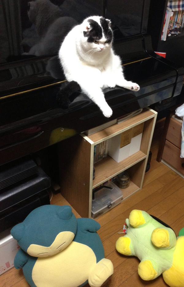 なんだよ! ピアノを椅子代わりにする猫の表情と態度ががふてぶてしい(笑)