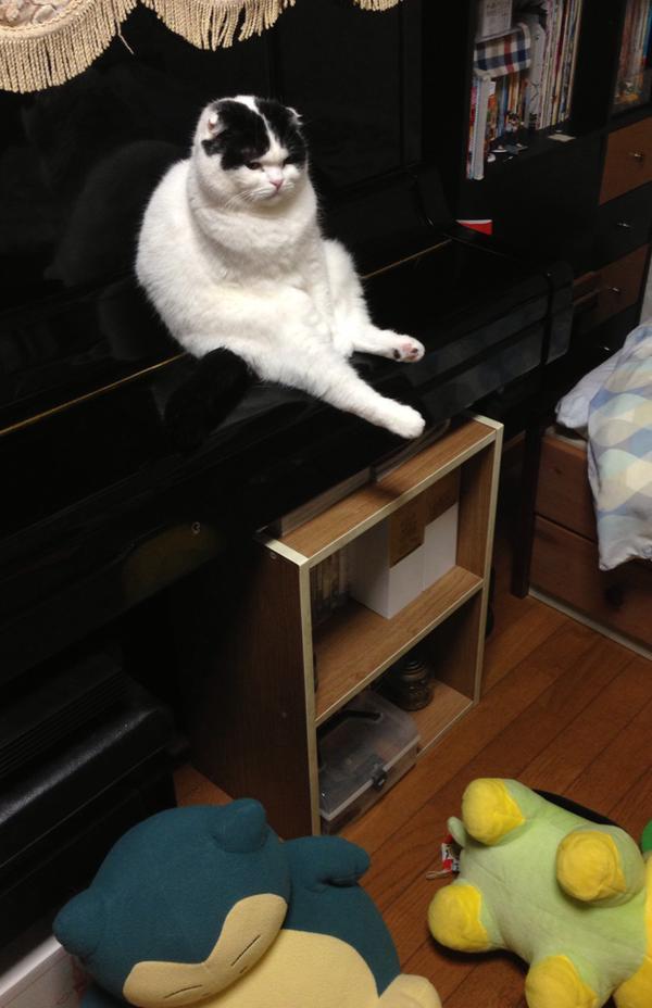 【猫おもしろ画像】ピアノを椅子代わりにする猫の表情と態度がおもしろい(笑)