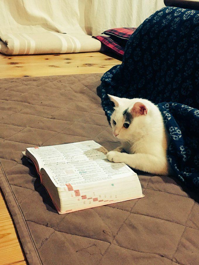 【猫おもしろ画像】似合う! こたつから出てる猫に辞書を添えてみたら賢そうになった(笑)