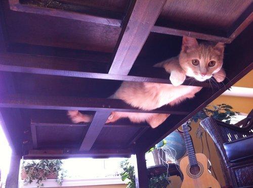 見つかった! まるで忍者のように机裏に隠れる猫がかわいい(笑)