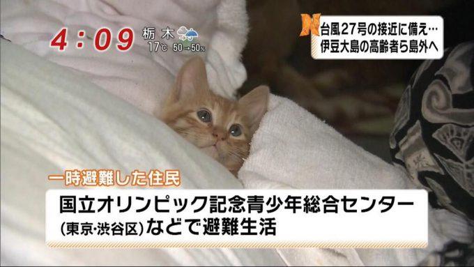 【台風と猫おもしろ画像】怖いニャ! 台風27号の接近で避難してる猫住民がかわいすぎ(笑)