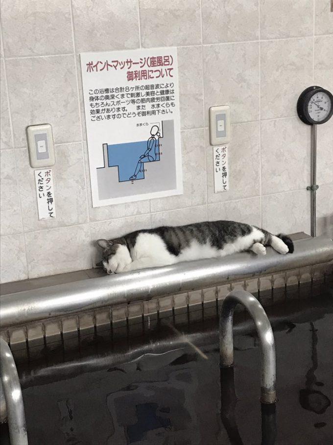 暖かいニャ! 銭湯の思わぬところで気持ちよさそうに眠る猫がかわいい(笑)
