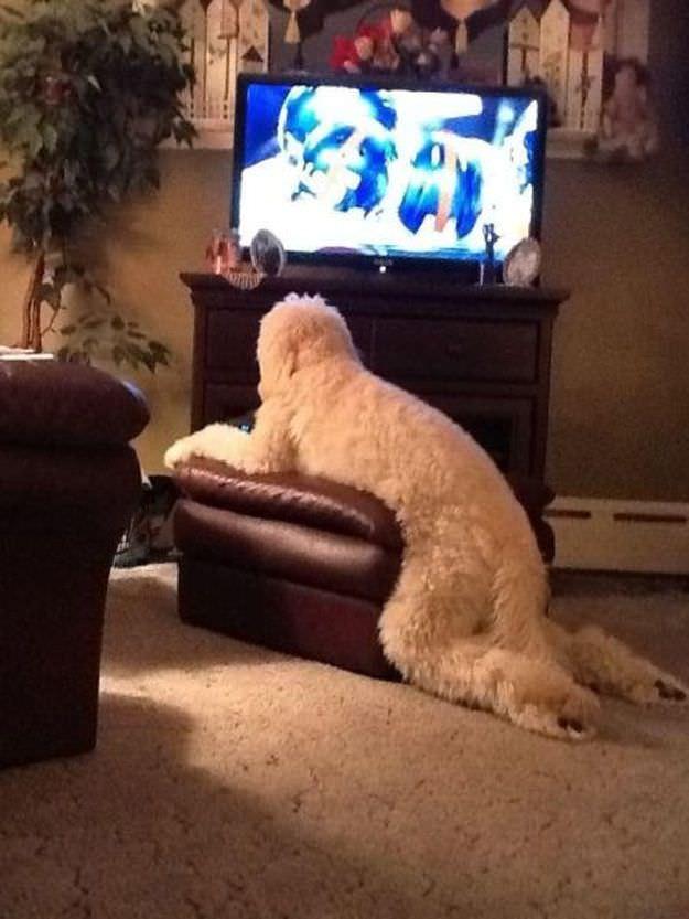え? 人間みたいにクッションを使ってテレビを見る犬(笑)