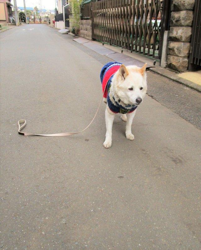 【犬おもしろ画像】待って! リードを落とした飼い主を待つ犬の表情が哀愁漂っています(笑)