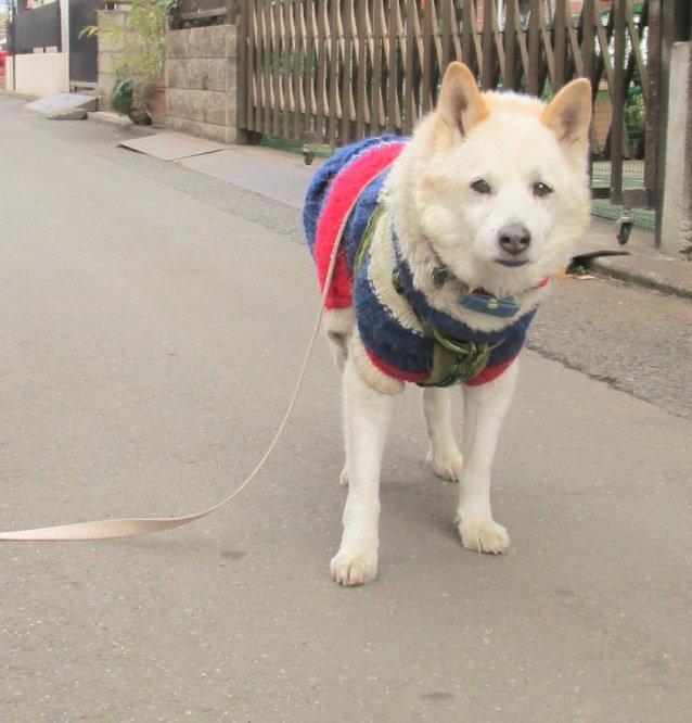 待って! リードを落とした飼い主を待つ犬の表情が哀愁漂っています(笑)