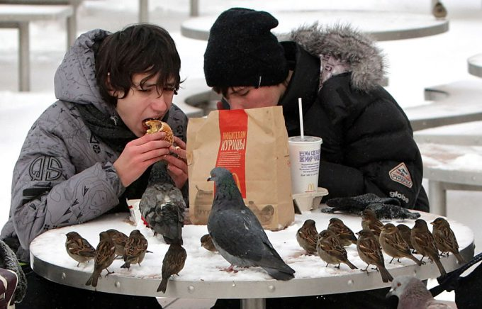 こっち来るな! モスクワの寒い雪の中でマックを食べてたら寄ってくる鳥たち(笑)