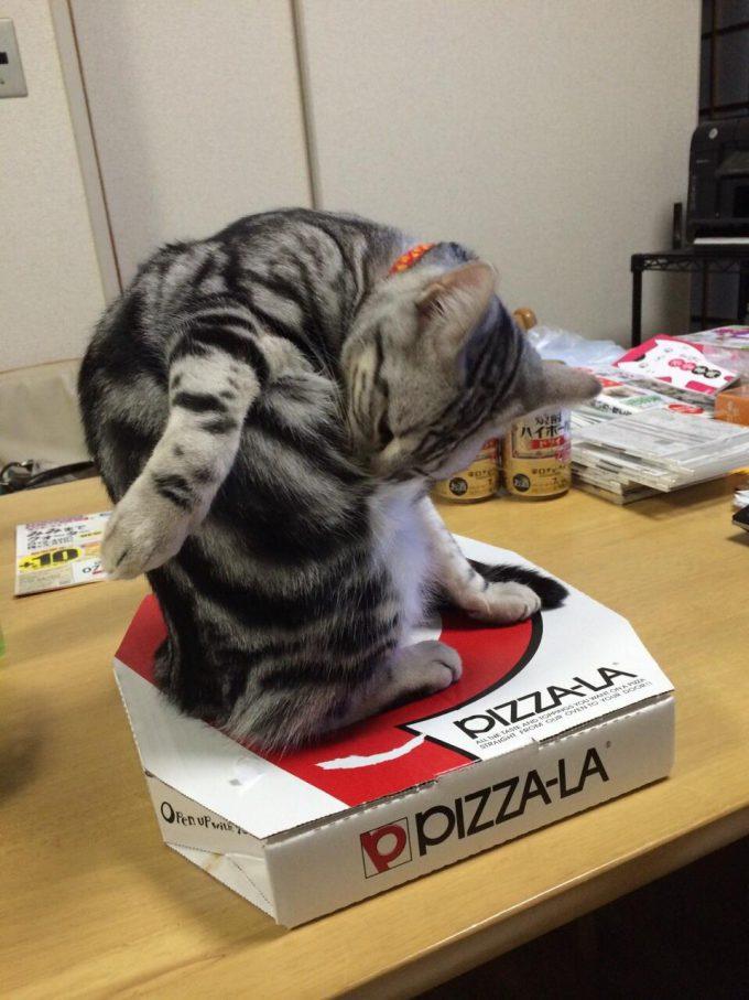 カイロ! 猫を飼っている家ではアツアツのピザを食べさせてもらえない(笑)
