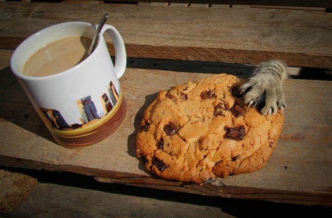 食べたいニャ! 朝食のクッキーを盗もうとする犯人(笑)