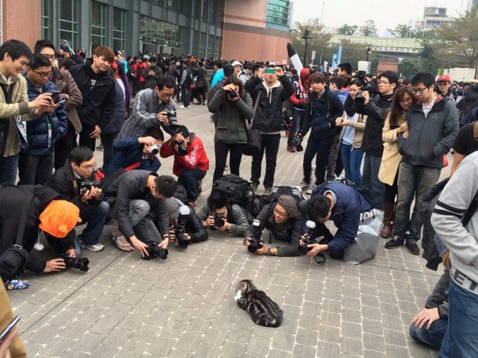 【猫とオタクおもしろ画像】ローニャングラー! 台湾の同人イベントでローアングラーたちが必死に撮影している被写体(笑)