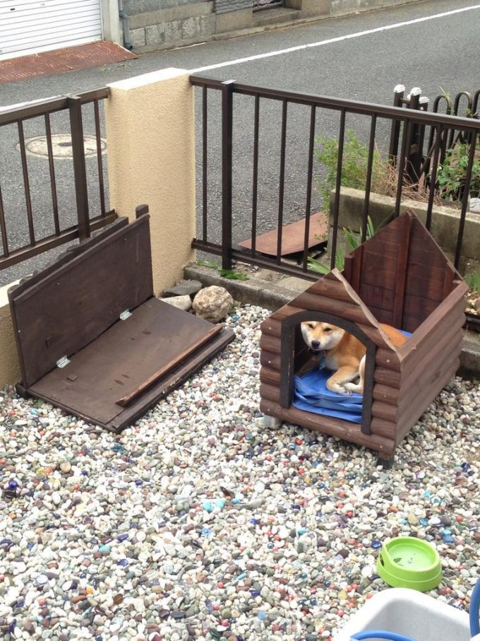 【台風と犬衝撃画像】台風15号の影響で犬小屋の屋根が吹っ飛んだ犬の様子!