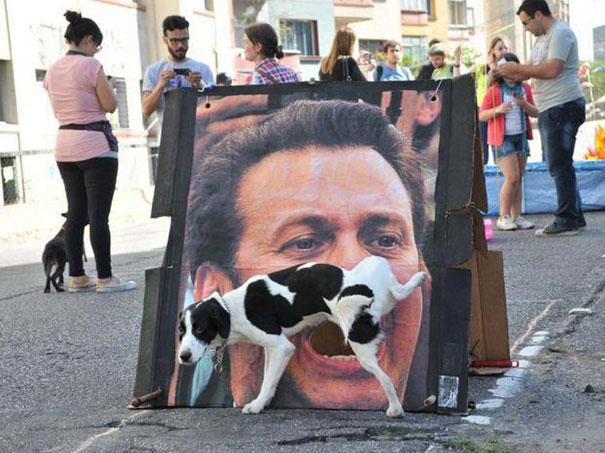 【犬おもしろ画像】ちょっと! 街中の顔アップ看板にとんでもないことをする犬(笑)