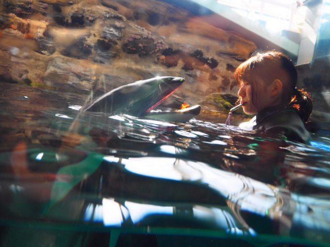 恐怖! 水族館でイルカと泳ぐお姉さんを撮影したら光の屈折で心霊写真に(笑)