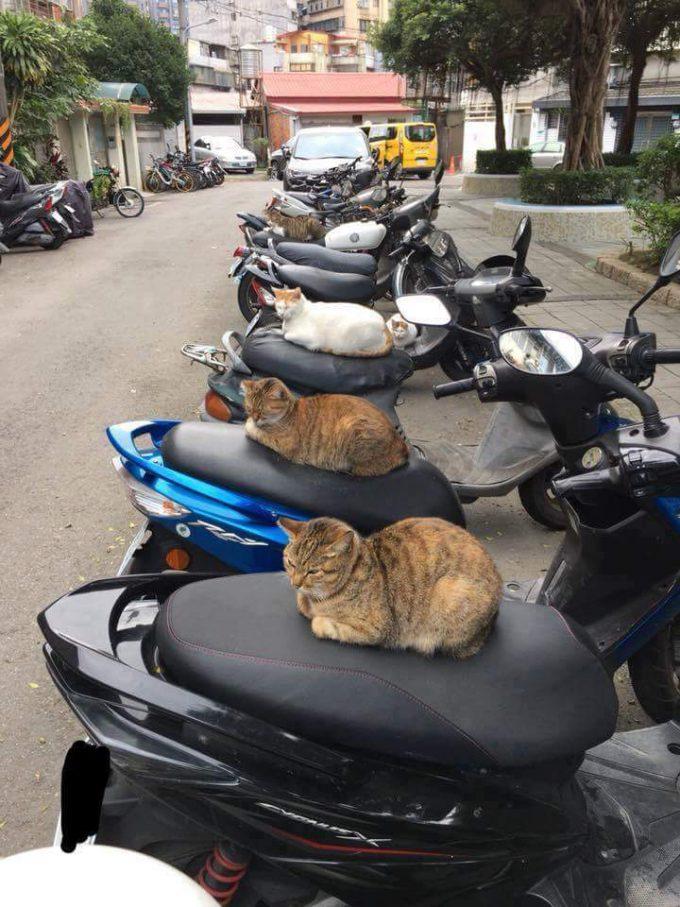 【猫おもしろ画像】温めるニャ! バイクシートを温めてくれる優しい猫ちゃんたち(笑)