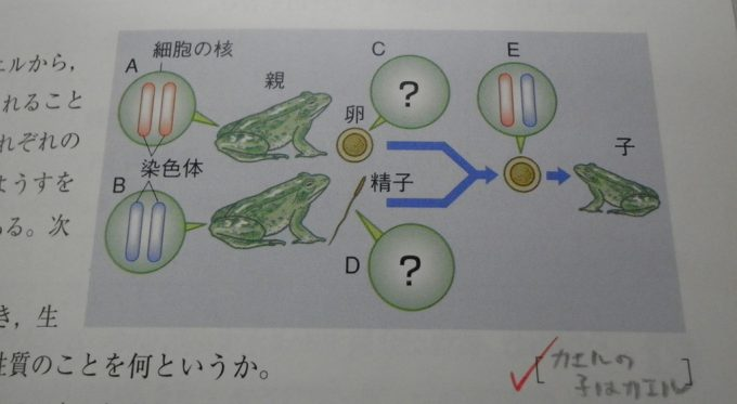 カエルの子! 理科の問題で答えが分からず適当に解答(笑)
