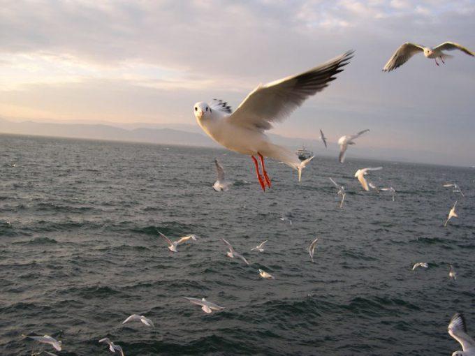 パシャ! 海で撮影していたら鳥がカメラ目線(笑)