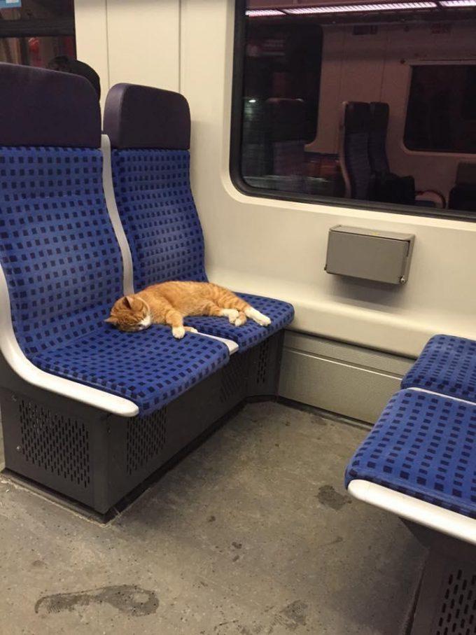 どこへ行く? ドイツの電車内で気持ちよさそうに眠る猫(笑)