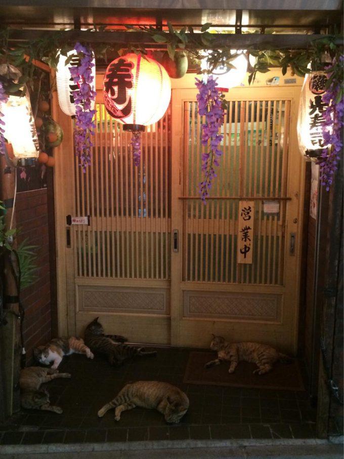 怖い集団! お寿司屋さんの前にたむろする猫たち(笑)