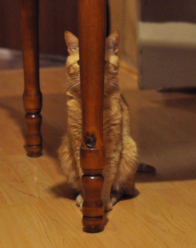 【猫おもしろ画像】テーブルの脚に隠れてるつもりの猫がおもしろい(笑)
