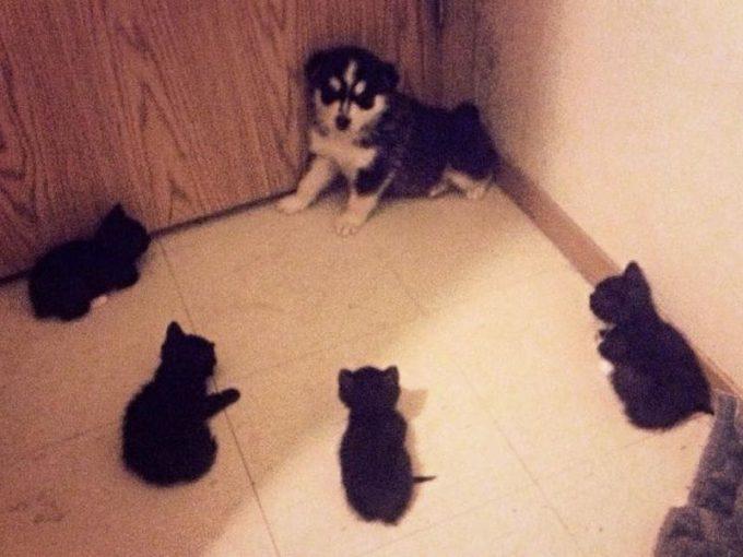 寄ってこないで! 子猫に追い詰められた子犬、逃げ場がない(笑)