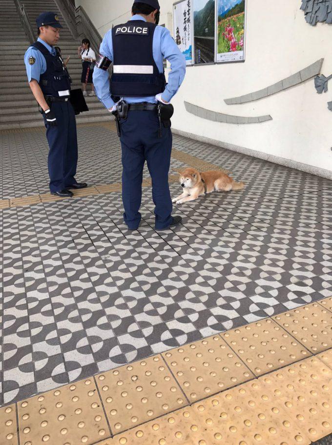 きみ! 道に座る犬、警察官2人に囲まれても動きもせず堂々としている(笑)